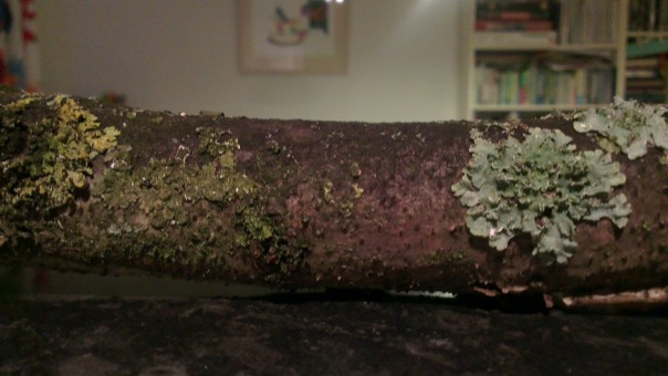 Lichen covered stick