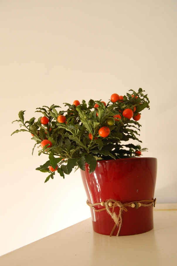 Easy Christmas decoration of plant with berries in pot